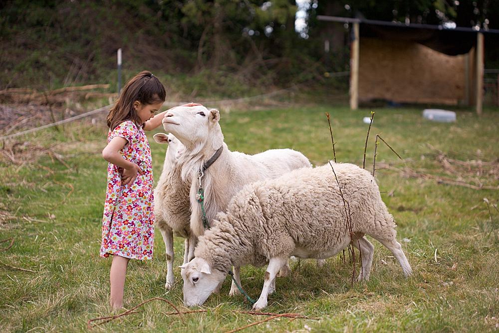 Girl in a field petting sheep.